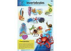Chart Invertebrates 9337138590020