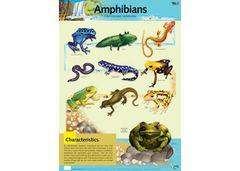 Chart Amphibians 9337138590037