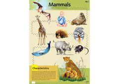 Chart Mammals 9337138590044