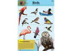 Chart Birds  9337138590099