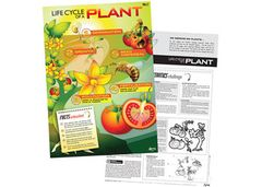 Chart Life Cycle Of A Plant  9337138590587